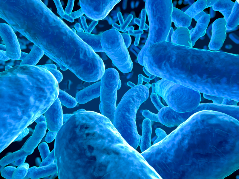 Image Result For Legionella